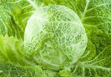 Free Cabbage Stock Photos - 5863083