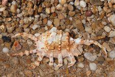 Free Seashell On Seashore Royalty Free Stock Photos - 5863218