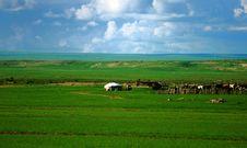 Free Hulunbuir Prairie Royalty Free Stock Image - 5863436