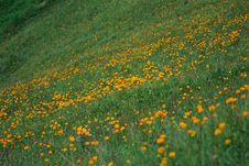 Free Meadow Stock Image - 5863451