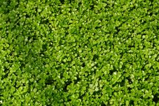 Free Green Leaves Royalty Free Stock Photos - 5863498