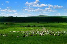 Free Hulunbuir Prairie Royalty Free Stock Photography - 5863567