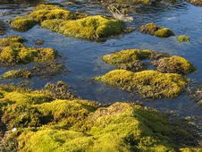 Free Green Moss In Water Stock Photo - 5863750