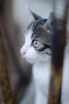 Free Young Cat S Eye Royalty Free Stock Image - 5864026