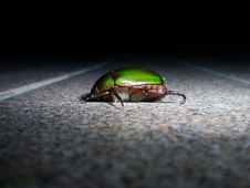 Free Beetle Stock Photo - 5867100