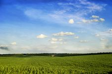 Free Sky And Grass Royalty Free Stock Photos - 5867278