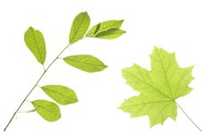 Free Leaves On White Stock Image - 5867451