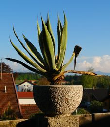 Free Decorative Plant. Royalty Free Stock Photography - 5867557