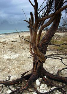 The Ghost Beach Tree Royalty Free Stock Photos