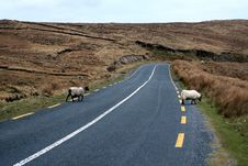 Free 2 Sheeps On Road Royalty Free Stock Images - 5868679