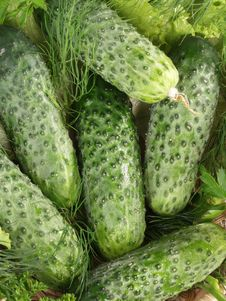 Free Cucumbers Royalty Free Stock Photography - 5869087