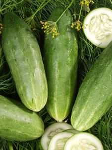 Free Cucumbers Stock Photography - 5869092