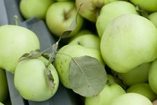 Free Green Apples Royalty Free Stock Images - 5870769