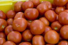 Free Red Tomatoes Royalty Free Stock Photo - 5870775