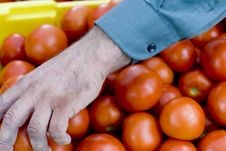 Free Red Tomatoes Royalty Free Stock Image - 5870776