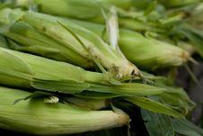 Free Corn Royalty Free Stock Photos - 5870808