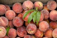 Free Peaches Royalty Free Stock Photos - 5870818