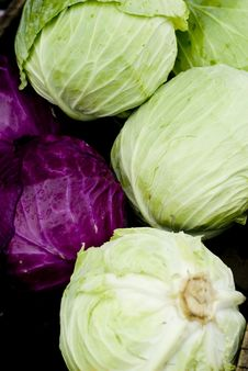 Free Green Cabbage Royalty Free Stock Photos - 5870868