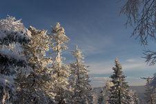 Free Winter Sunlight Royalty Free Stock Photography - 5871417