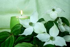 Free Dainty Dogwood Royalty Free Stock Photography - 5871787