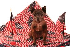 Free Patriotic Chihuahua - America Royalty Free Stock Photo - 5872655
