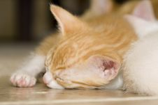 Free Sleeping Orange And White Kitten Royalty Free Stock Photo - 5873275