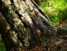 Free Basis Of A Tree Royalty Free Stock Photos - 5873338