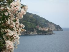Free Manarola And White Flowers Royalty Free Stock Photography - 5873487