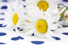 Free White Camomiles Stock Photography - 5873842