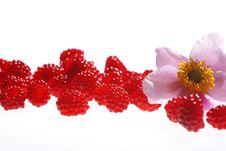 Free Fresh Raspberries Stock Photography - 5874192