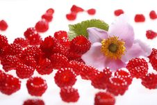 Free Raspberries And Blossoms Stock Photo - 5874400