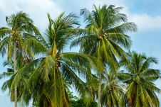 Free Palm Trees On Sky Background Royalty Free Stock Photo - 5874565