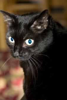 Free Black Cat Royalty Free Stock Photo - 5875015