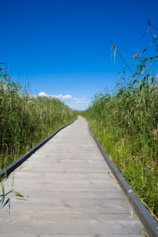 Free Boardwalk Stock Photo - 5877180