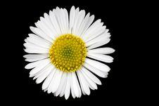 Free Isolated Daisy Stock Image - 5878181