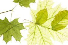 Free Leaves On White Stock Photo - 5878410