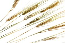 Free Wheat Royalty Free Stock Images - 5878549