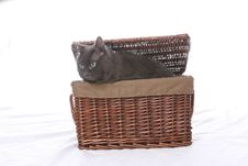 Free Black Cat Coming Out Of Wicker Basket Stock Photo - 5878720