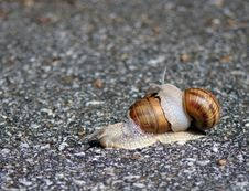 Free Two Snails Play Royalty Free Stock Photo - 5878985
