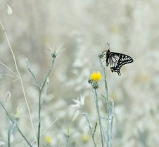 Free Butterfly Stock Photography - 5879472