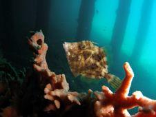 Fish Under Bridge Stock Photos
