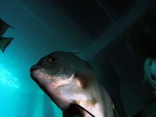 Fish Under Bridge Royalty Free Stock Photography