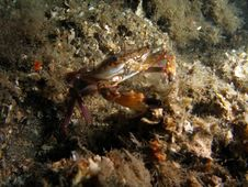 Free Crab Under Bridge Royalty Free Stock Photography - 5879727