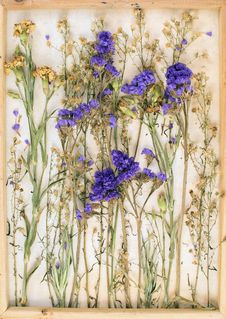 Free Vintage Image Of Dried Flowers Royalty Free Stock Photo - 58756175