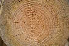 Free Wood Tree Rings Texture Royalty Free Stock Photos - 58770988