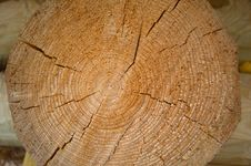 Wood Tree Rings Texture Royalty Free Stock Image