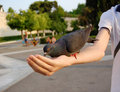 Free Pigeon Feeding From Hand Royalty Free Stock Image - 5881436