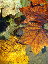 Free Colorful Leaves Royalty Free Stock Photography - 5885827