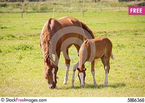 Free Horses Royalty Free Stock Photos - 5886368