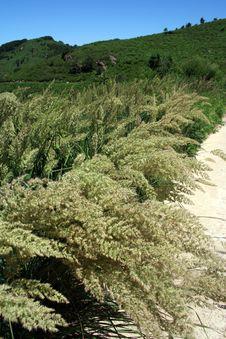 Free Strawy Paddy Harvest Stock Photo - 5881190